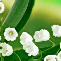 1er-mai-pourquoi-offre-t-on-du-muguet